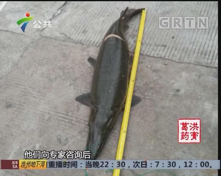 广州番禺:锦鲤丢失 是什么原因?