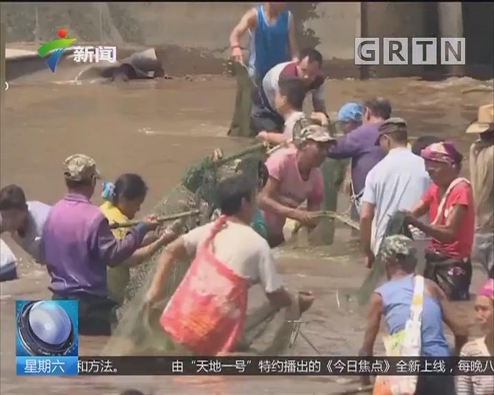 """云南孟连:盛大""""神鱼节"""" 捉鱼大军浑水摸鱼"""