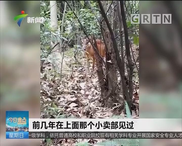 广州白云山:街坊爬山有奇遇!神奇动物是什么?