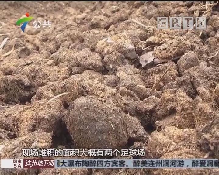 村民投诉:几百吨牛屎露天堆放 大量苍蝇恶臭难顶