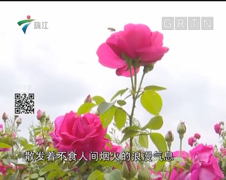 云南大学饭堂玫瑰花做菜