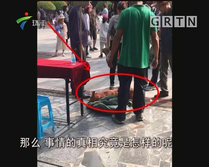 南沙:祭祀烧猪不翼而飞 原是被女子打包带走