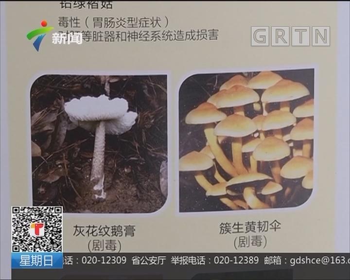 疾控专家提醒:勿采食野生或来源不明的蘑菇