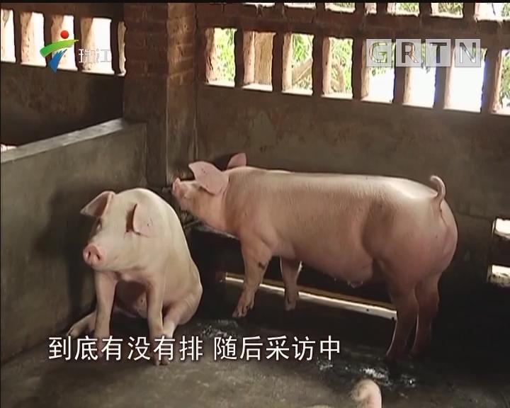 茂名化州:养猪场污染山塘 村民饮水受影响