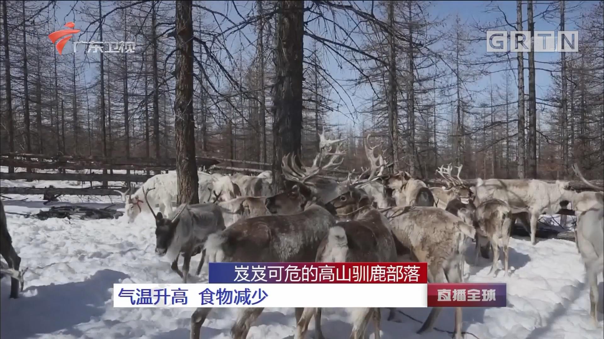 岌岌可危的高山驯鹿部落:气温升高 食物减少