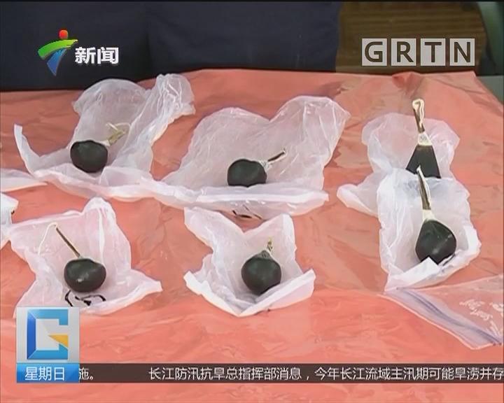 """深圳:行李箱""""藏""""熊胆 女子入境被查"""