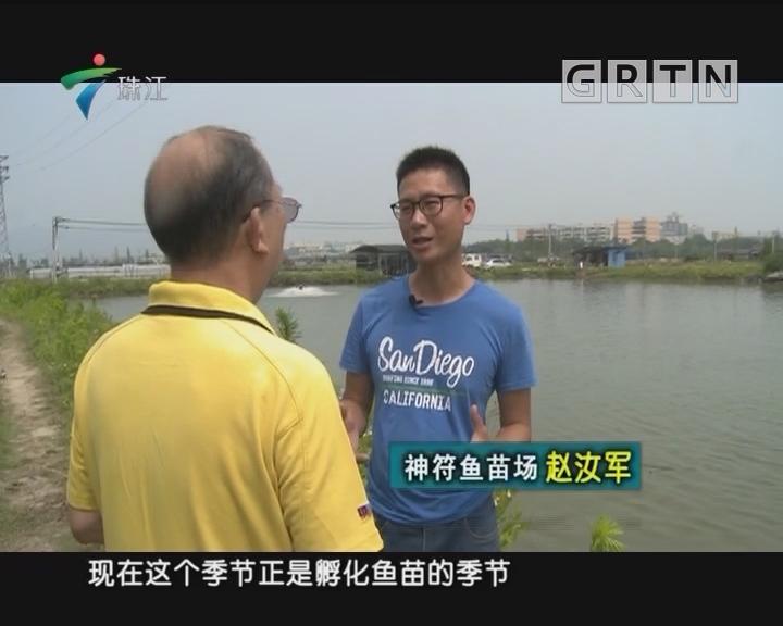 [2018-04-16]摇钱树:育好鱼苗养鲈鱼