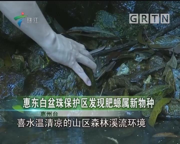 惠东白盆珠保护区发现肥螈属新物种