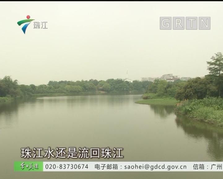 净化珠江水 海珠湿地升级生态净化系统