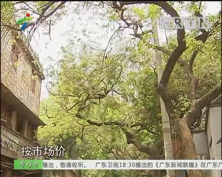 广州:街坊担心拆迁影响名树 住建局:尽量保留原貌