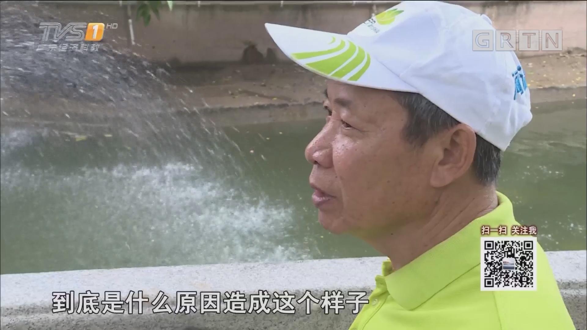 慕容森林:我想青山绿水重现驷马涌(下)