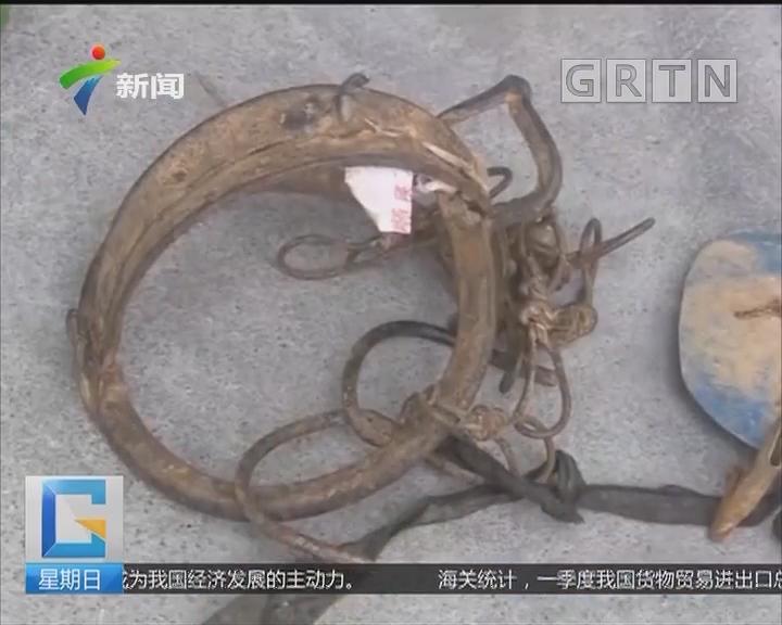 江门:一男子林区猎捕野生动物被查处