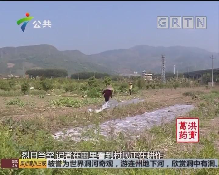 韶关:红火蚁泛滥 多名村民被咬伤