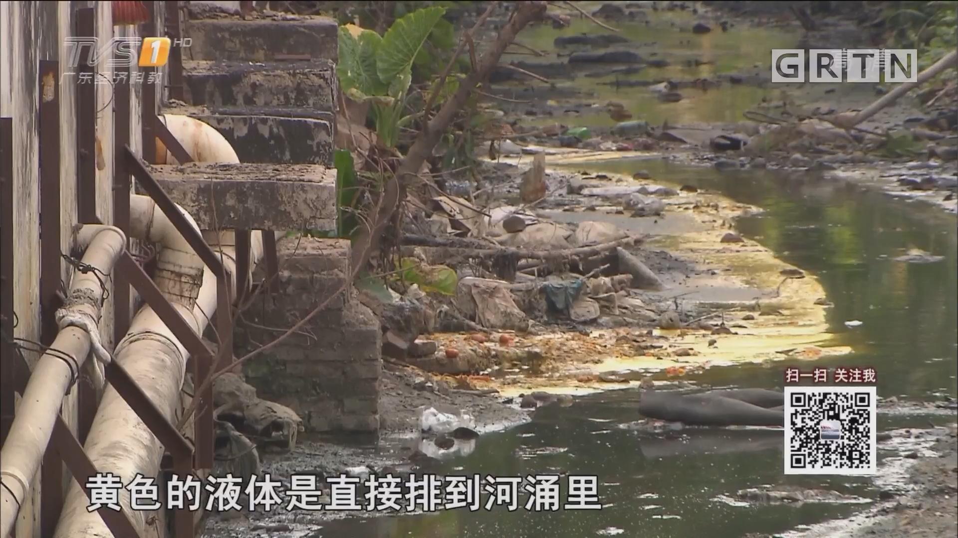 新闻调查:中山两处村庄 水污染触目惊心