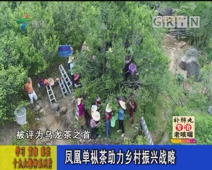 凤凰单枞茶助力乡村振兴战略
