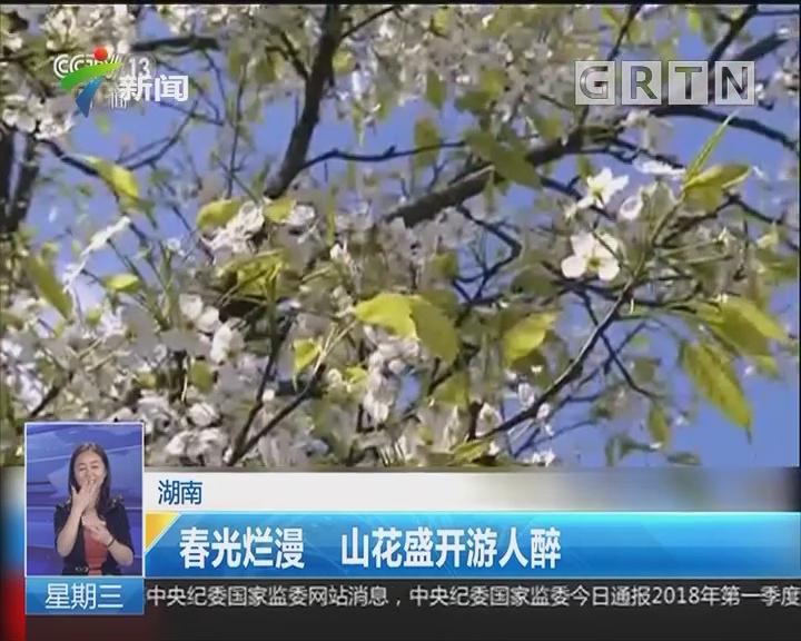 湖南:春光烂漫 山花盛开游人醉