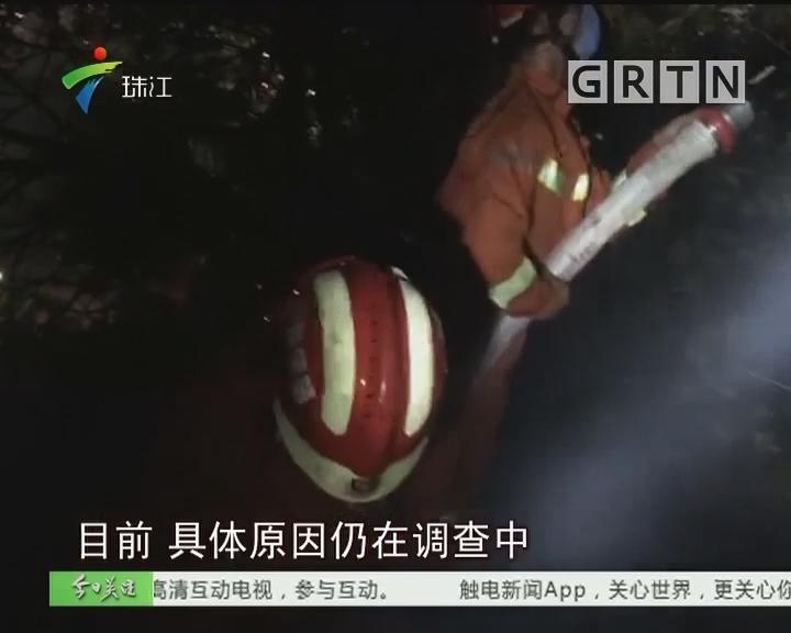 肇庆:拜祭引发山火 消防紧急扑灭