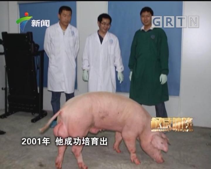 """[2018-04-29]权威访谈:""""亨廷顿猪""""诞生记"""