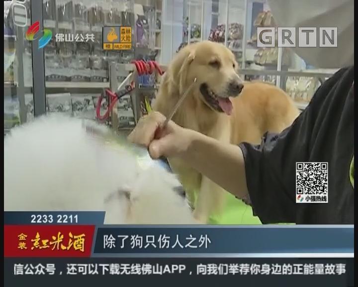 佛山:养犬引发争议多 市法制局立法调研征求意见