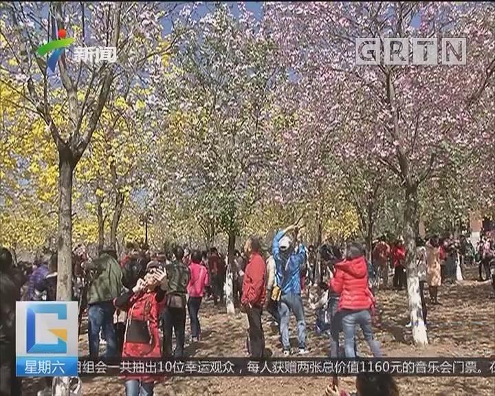 """广州:华农成""""网红打卡点"""" 一天超过20万人参观"""