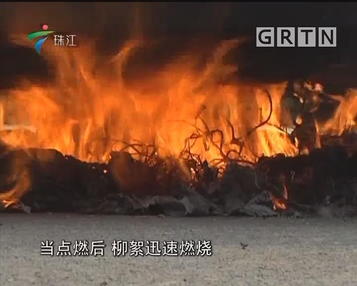 消防提醒:柳絮极其易燃