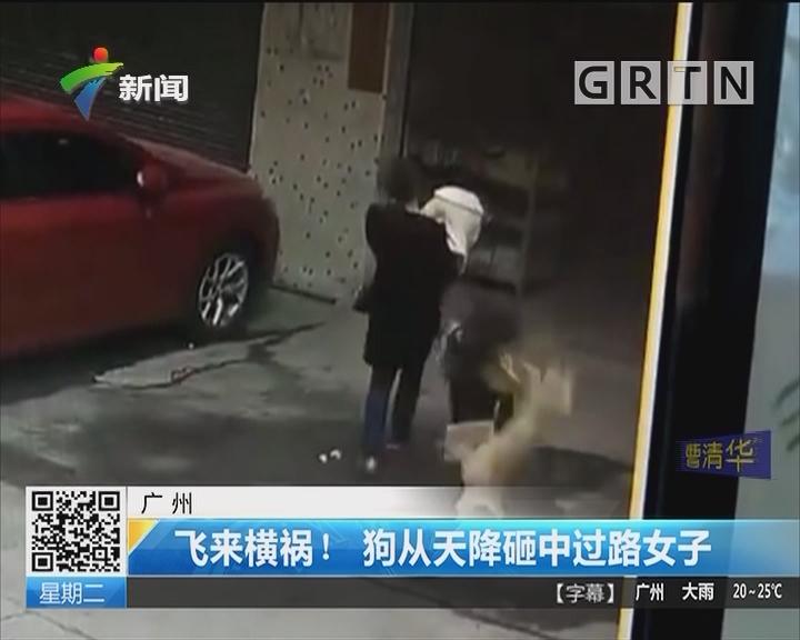 广州:飞来横祸!狗从天降砸中过路女子