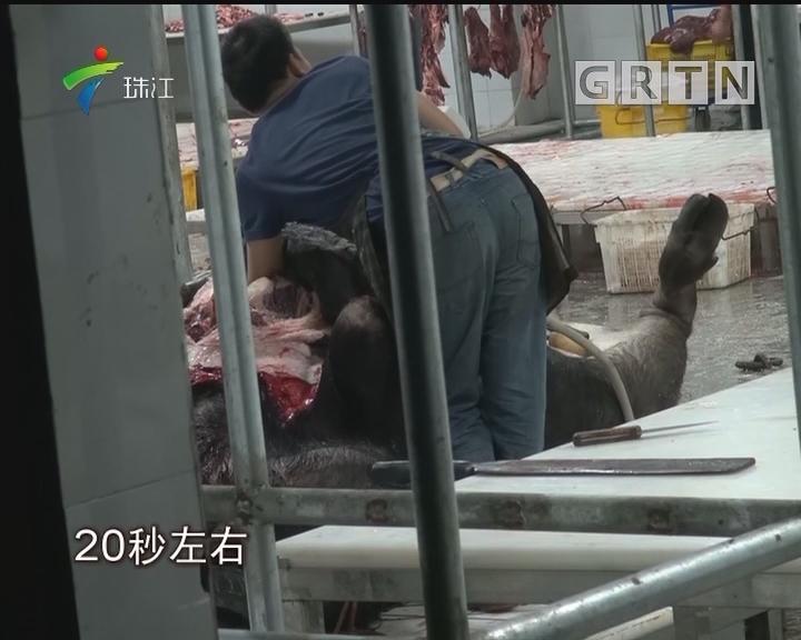 东莞:清溪、茶山定点屠宰场 牛肉竟违法注水