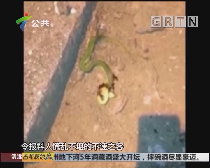街坊报料:夜晚有蛇出没 街坊慌乱不已
