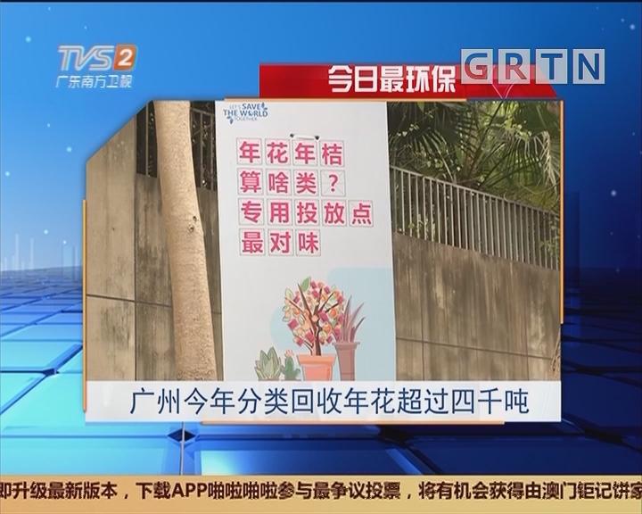 今日最环保:广州今年分类回收年花超过四千吨