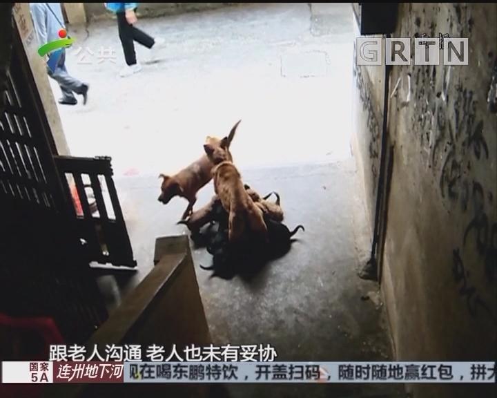 韶关:楼下有人养多只犬 邻居称受滋扰