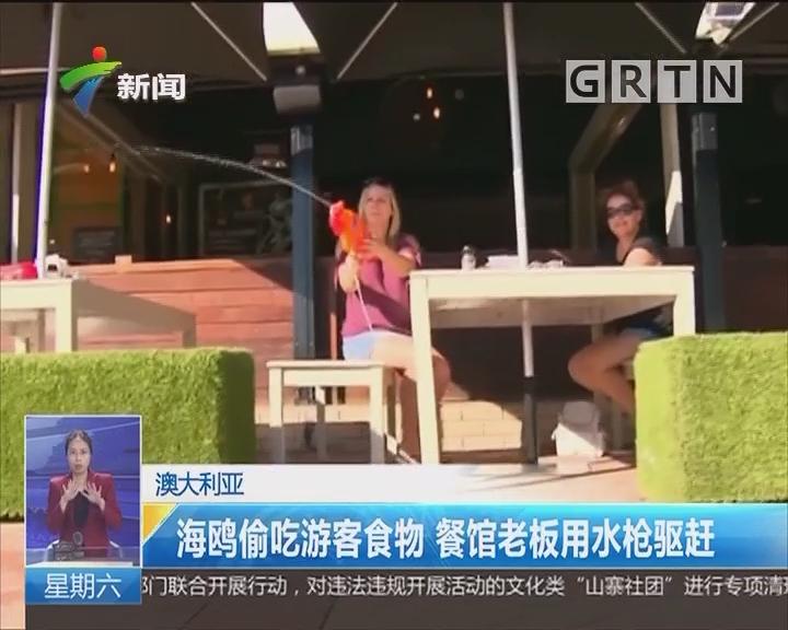 澳大利亚:海鸥偷吃游客食物 餐馆老板用水枪驱赶