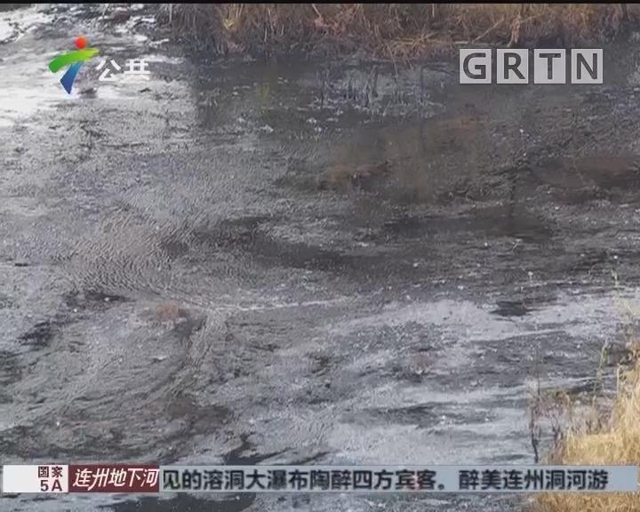 清远:村里有人偷倒废机油 积聚似河流