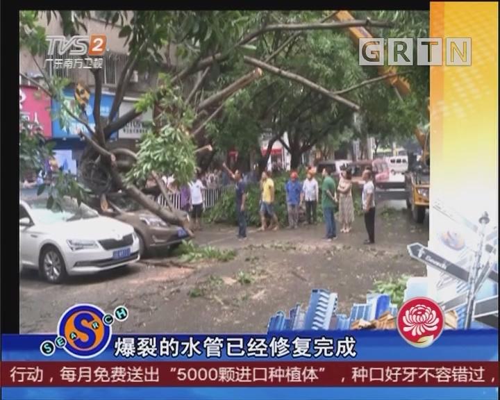 大树倒塌 车辆遭殃