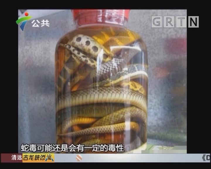 """惠州:男子买""""五步蛇""""泡酒 被毒蛇咬后险丢命"""