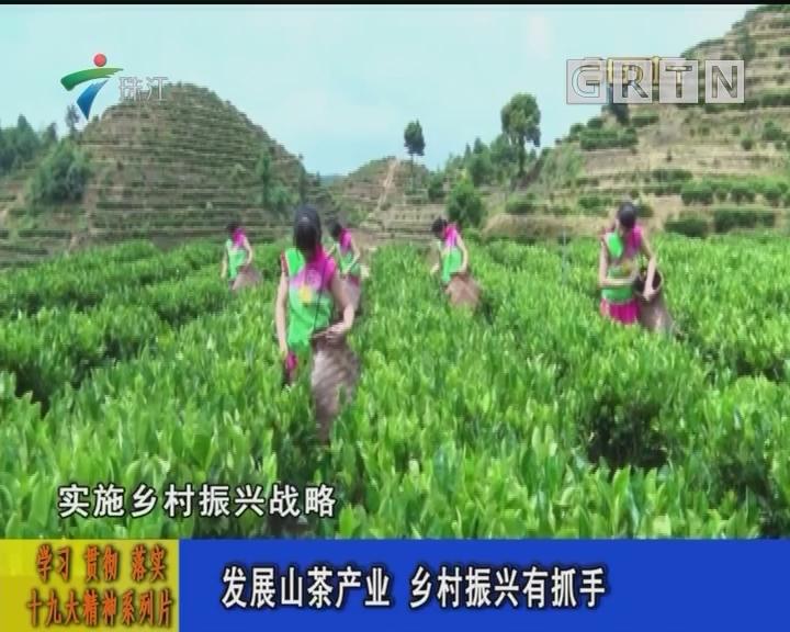 发展山茶产业 乡村振兴有抓手