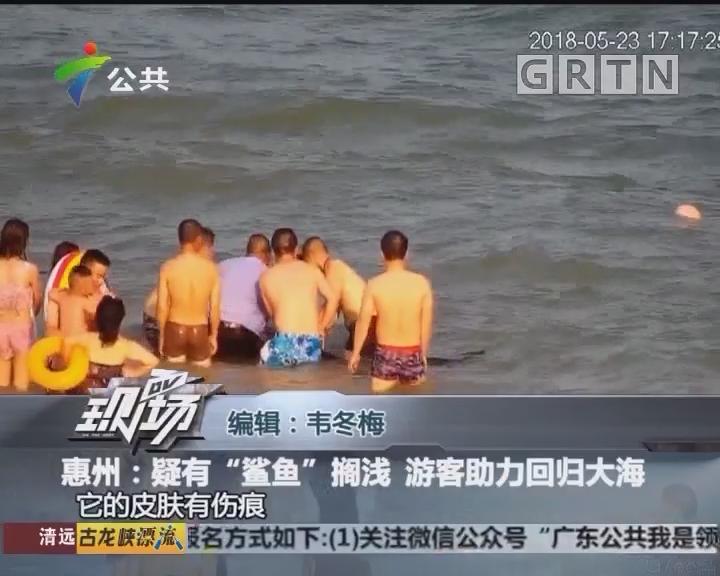 """惠州:疑有""""鲨鱼""""搁浅 游客助力回归大海"""
