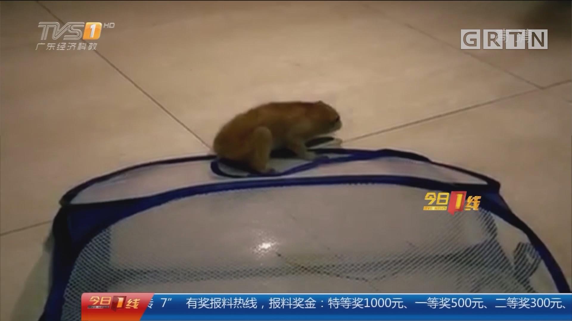 """广州:蜂猴""""宝宝""""小区引围观 被送救助中心"""