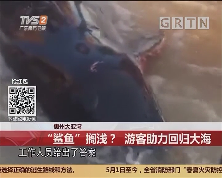 """惠州大亚湾:""""鲨鱼""""搁浅?游客助力回归大海"""