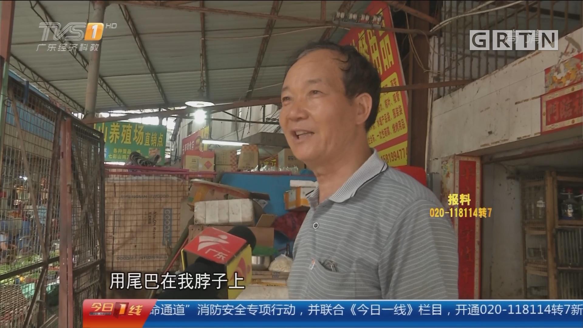 """江门水口镇:大蛇外墙游走 """"高人""""徒手抓捕"""