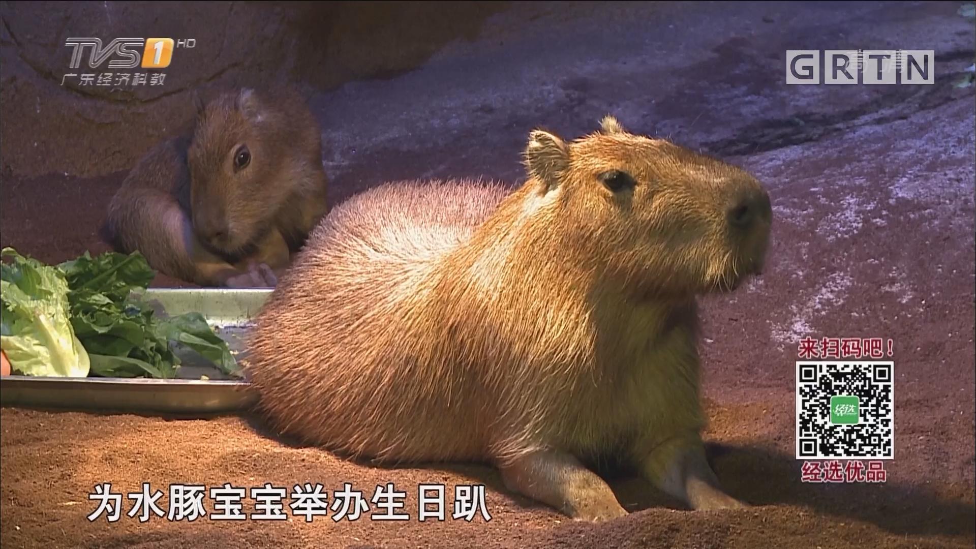 """广州正佳极地海洋世界启动""""鲸彩三重奏"""""""