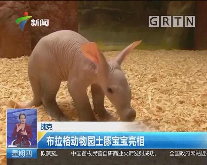 捷克:布拉格动物园土豚宝宝亮相