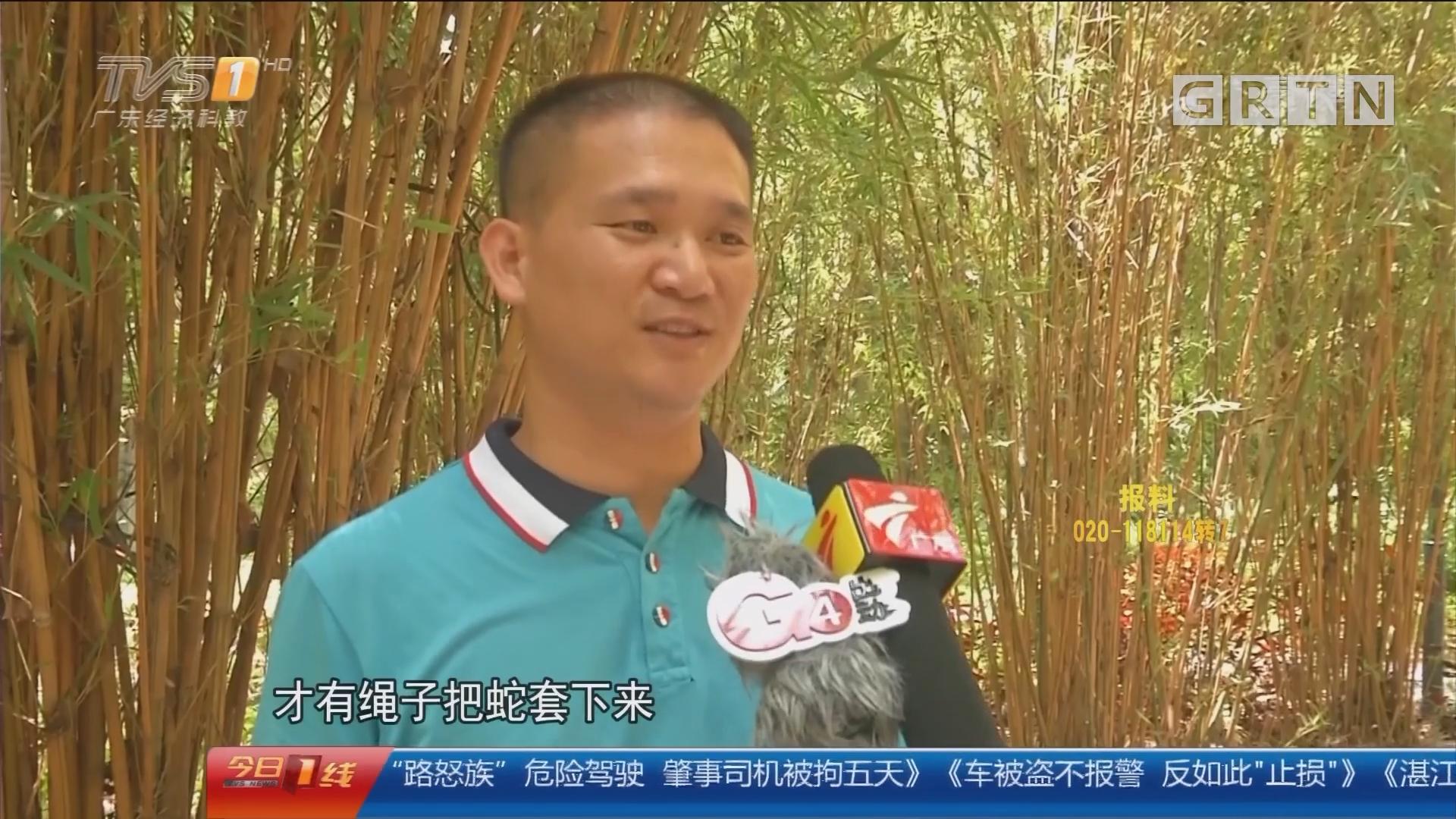 深圳湾公园:大蛇出没吓人 保安擒拿