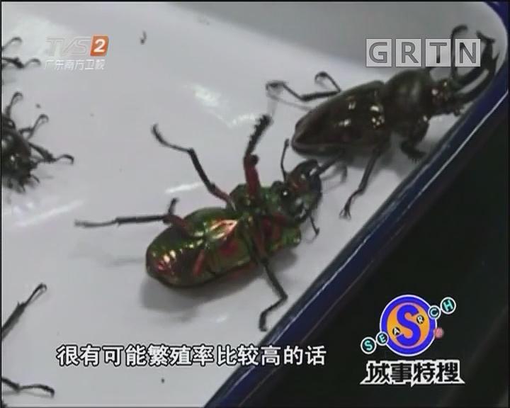 """活体金色甲虫变饼干""""偷渡""""专用"""