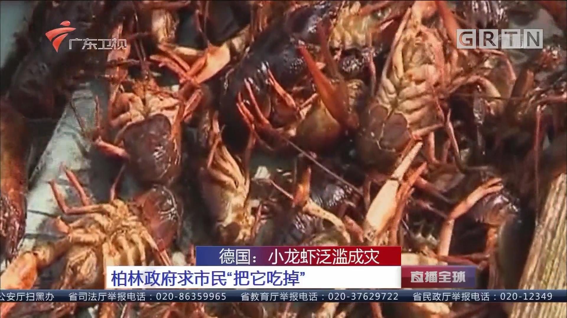 """德国:小龙虾泛滥成灾 柏林政府求市民""""把它吃掉"""""""