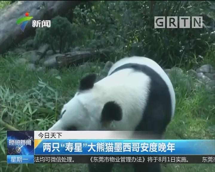 """两只""""寿星""""大熊猫墨西哥安度晚年"""