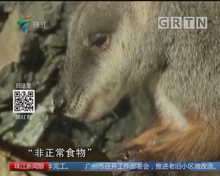 澳袋鼠频袭游客 全是胡萝卜惹的祸