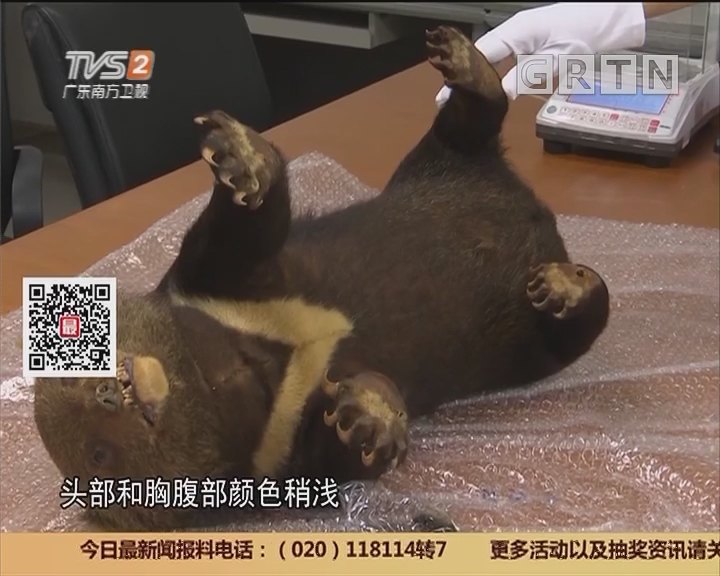 深圳:罗湖海关过关行李 惊现濒危黑熊标本
