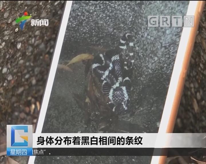 广州:暴雨来袭 中山大学校区一条蛇火了