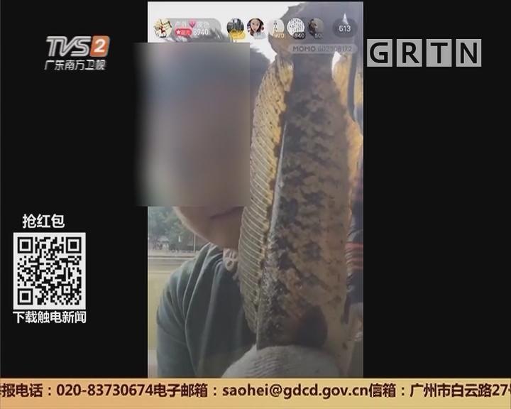 网络直播乱象:男子公然射杀鱼类 且进行网络直播