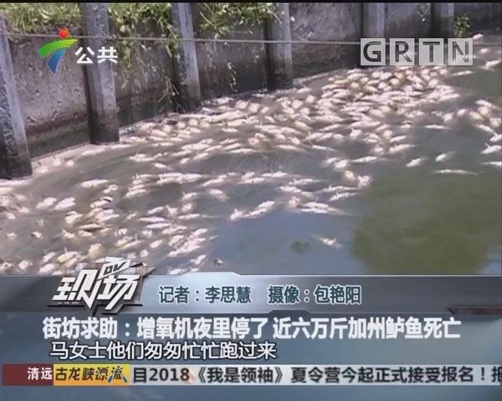 街坊求助:增氧机夜里停了 近六万斤加州鲈鱼死亡